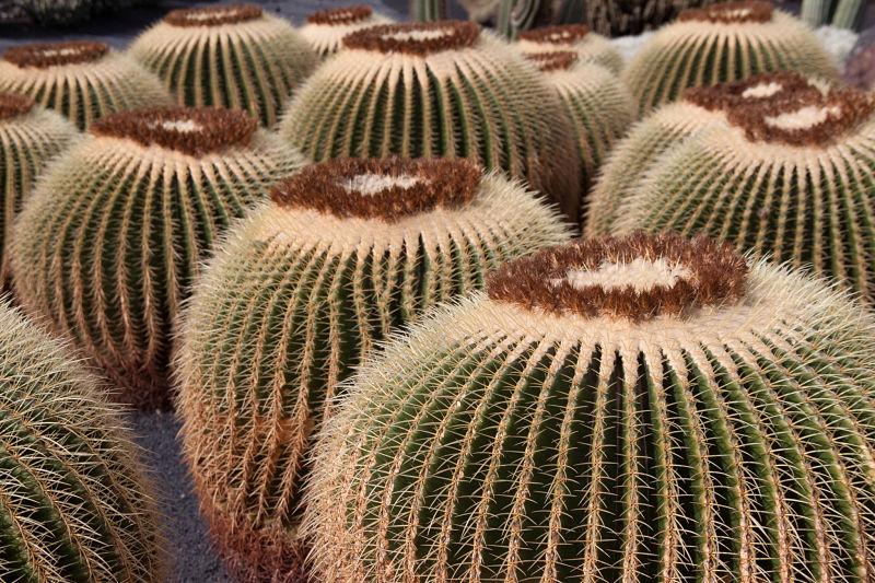 jardin-de-cactus-lanzarote
