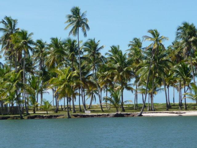 palme-boipeba-brasile