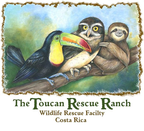 toucan-rescue-ranch-costa-rica