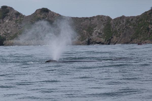 whale-watching-marino-ballena-costa-rica
