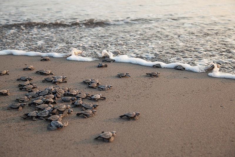tartarughe-chiapas