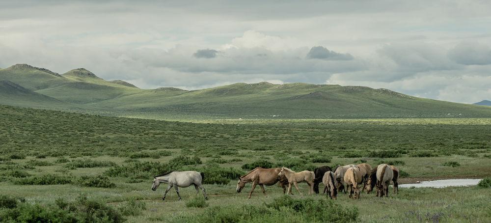 transiberiana-mongolia