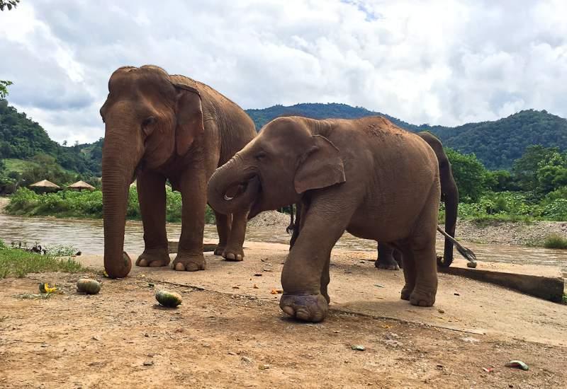 Nature Elephant Park