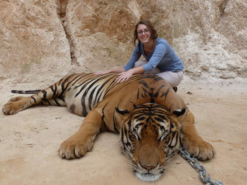 tempio-delle-tigri