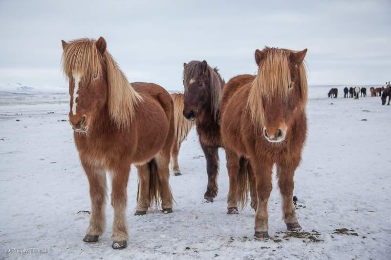 Sito di incontri gratis Islanda