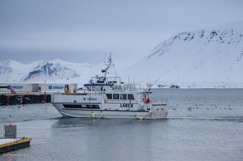 whale-watching-islanda