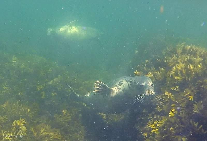 nuotare-con-foche-svezia