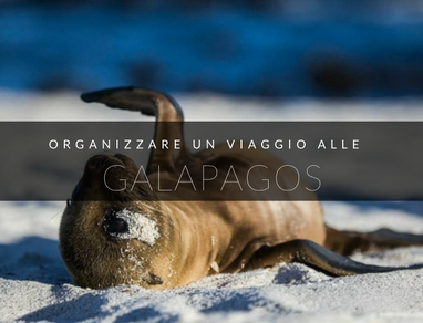 galapagos low cost