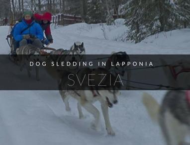 dogsledding lapponia
