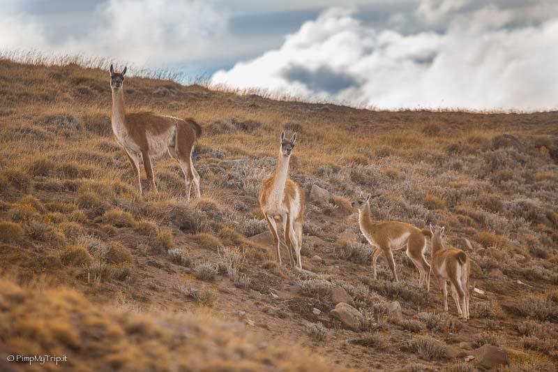 Safari Experience el calafate