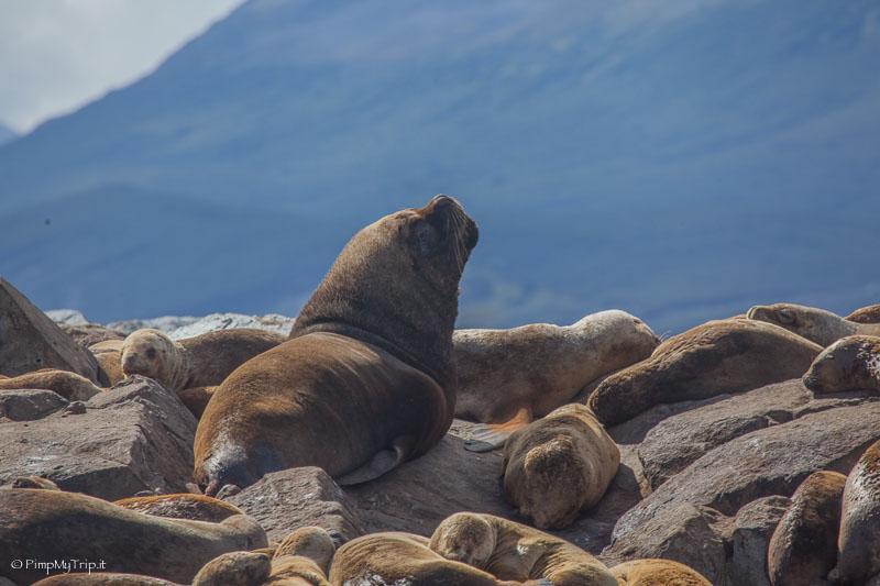 Isla de los lobos beagle