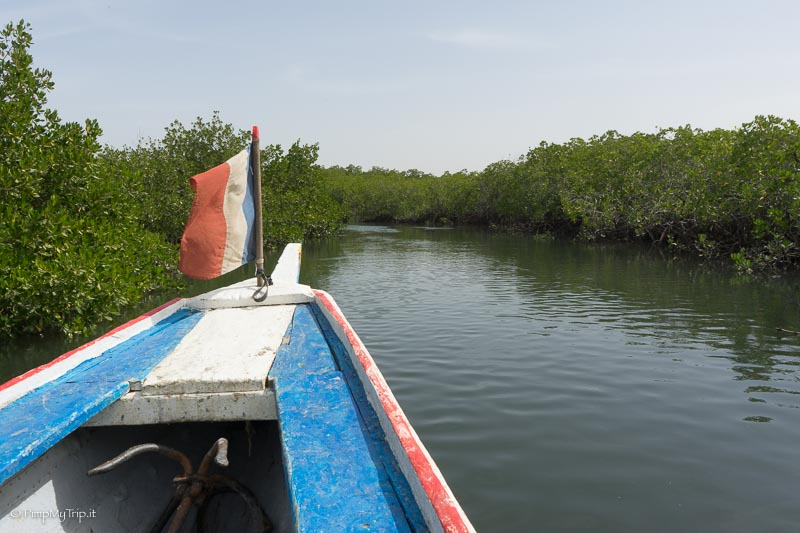 piroga-mangrovie