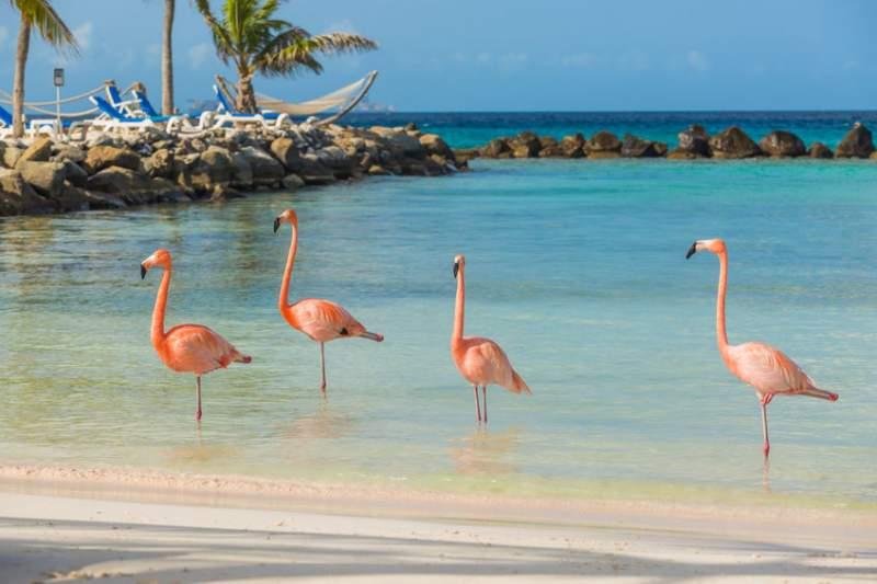 spiaggia-fenicotteri-rosa