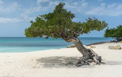 aruba-low-cost