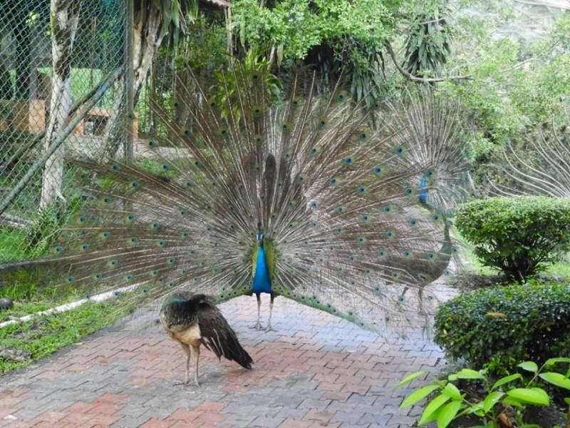 birds-park-kuala-lumpur