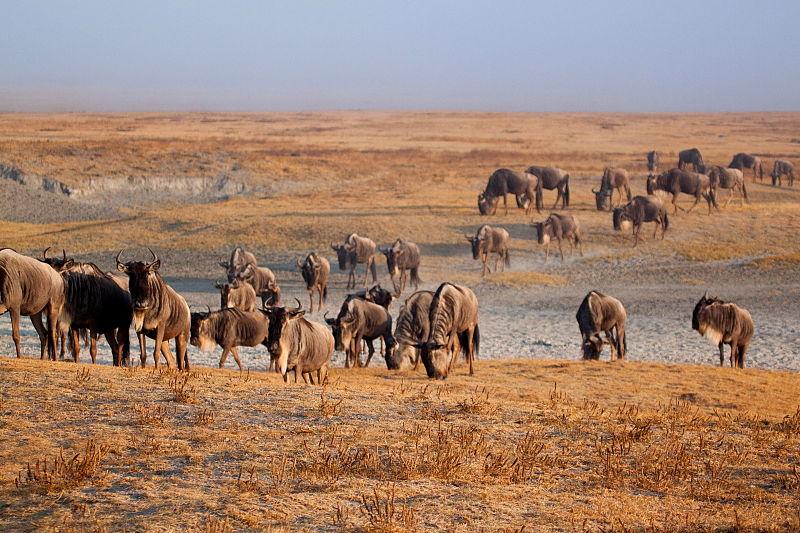 miglior-obiettivo-safari