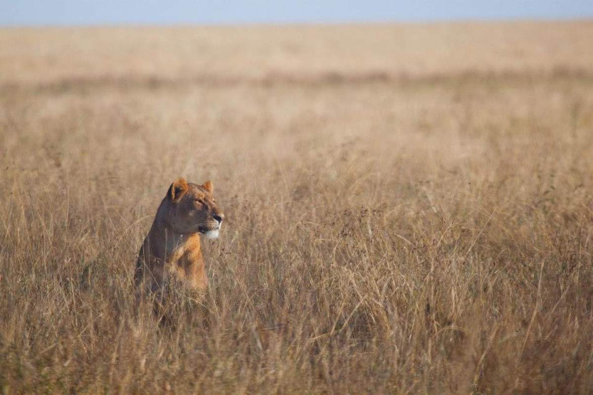 attrezzatura-fotografica-safari
