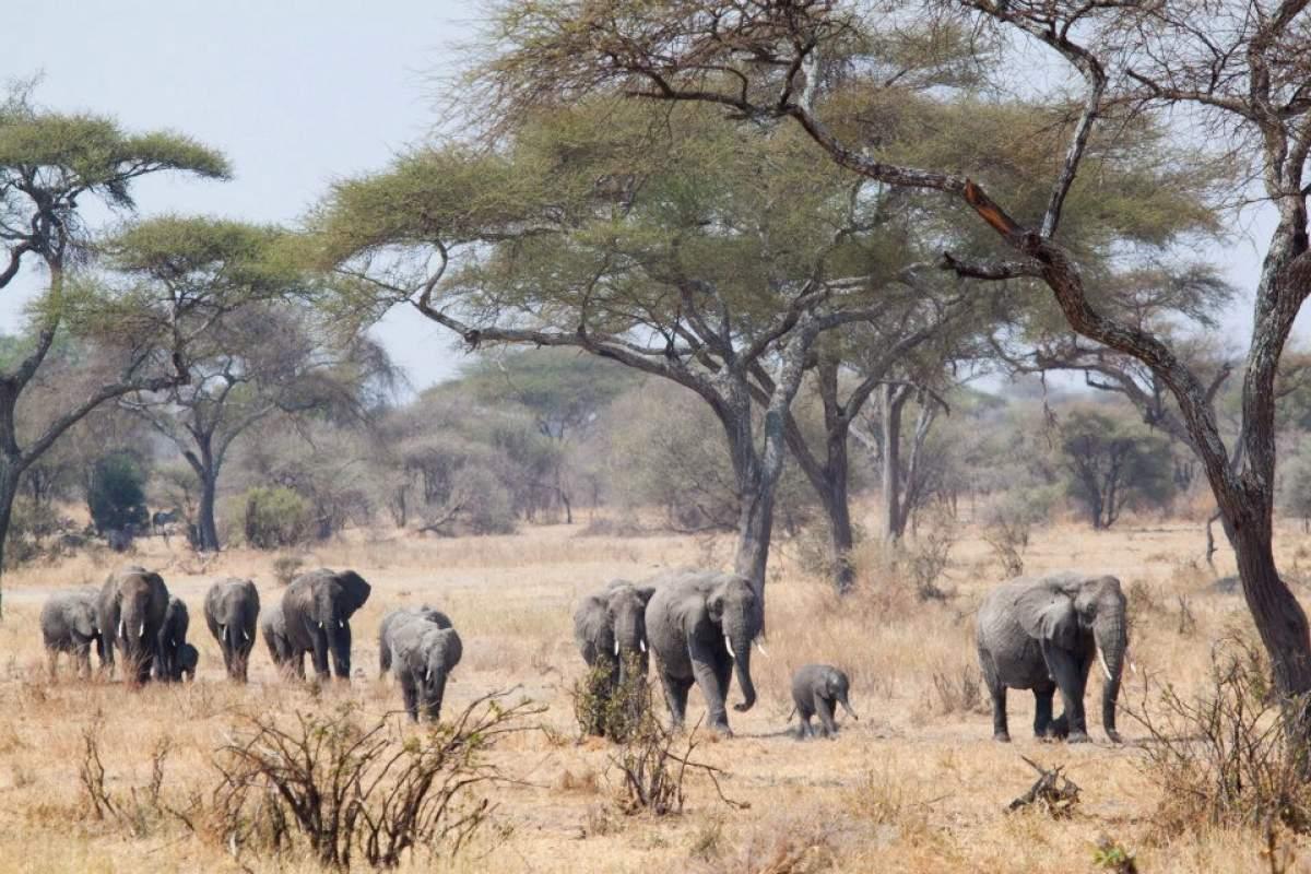 macchina-fotografica-safari