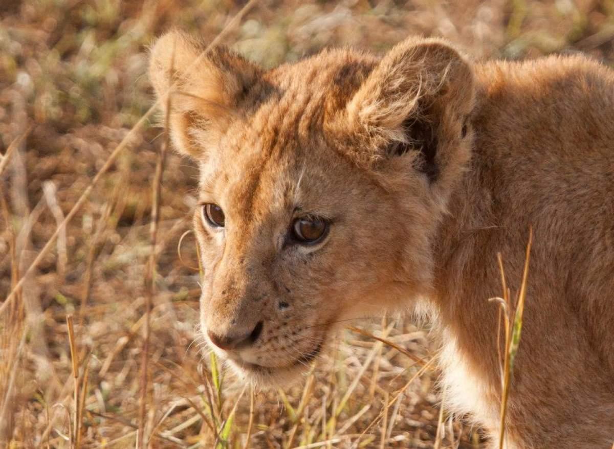 fotografare-safari