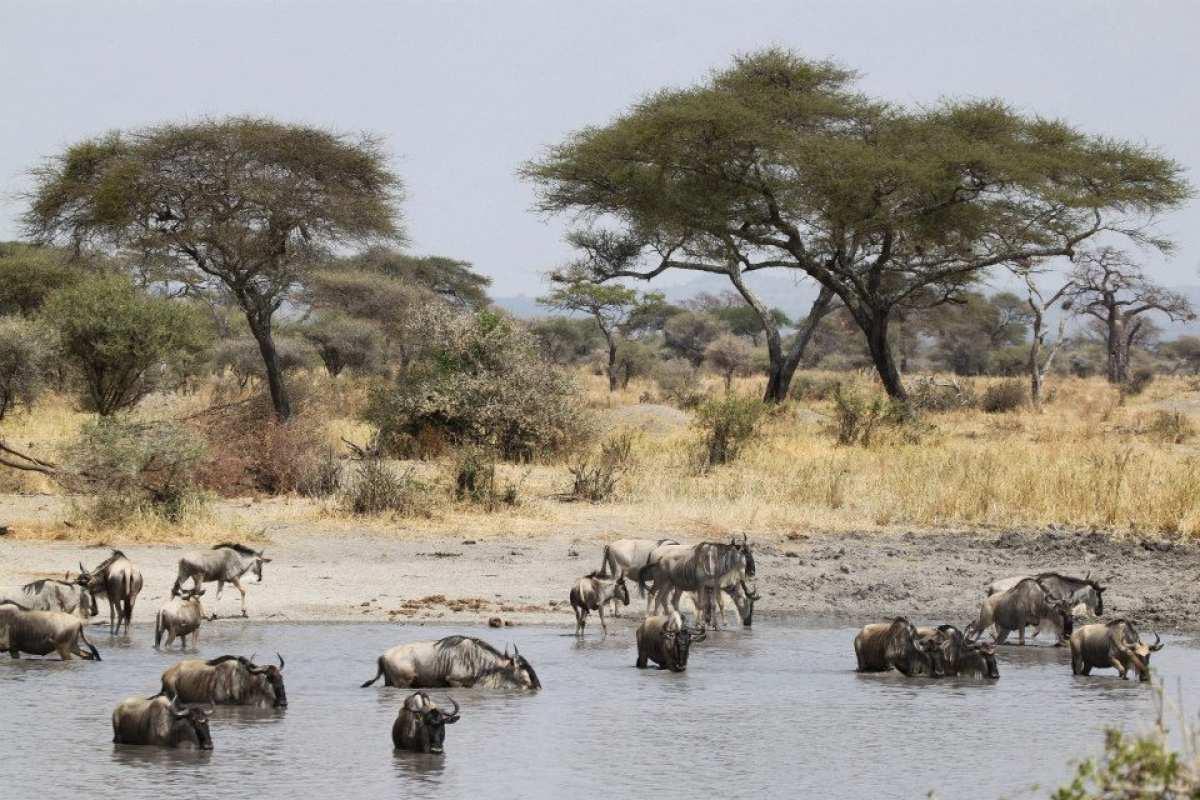 cosa-portare-fotografia-safari