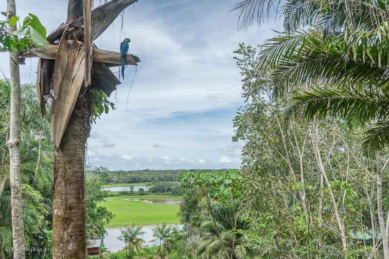 amazzonia-colombiana
