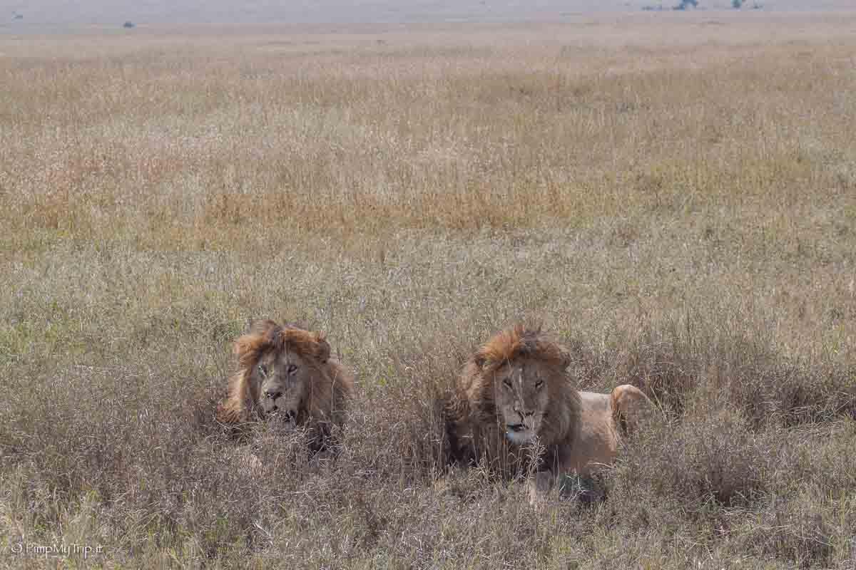 cosa-vedere-safari-tanzania