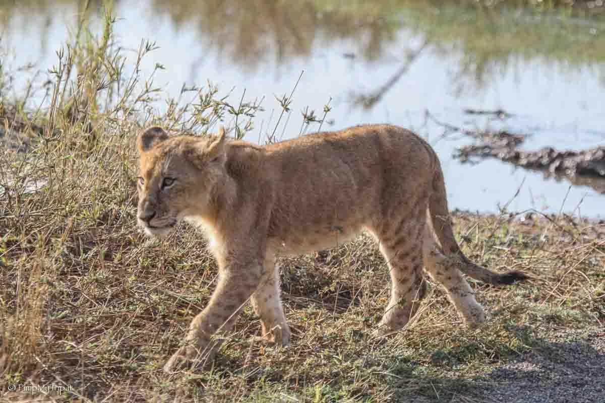 serengeti-parco-tanzania