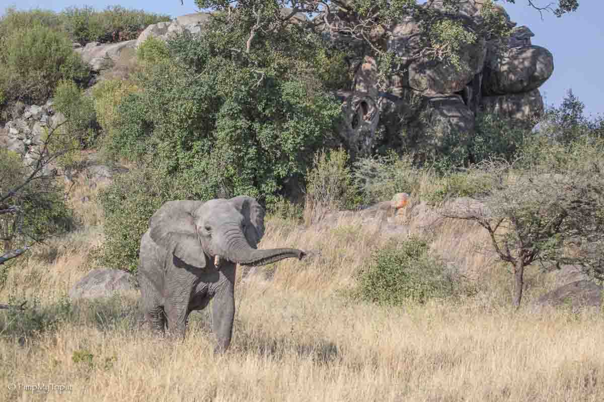 Giacca Safari Serengeti