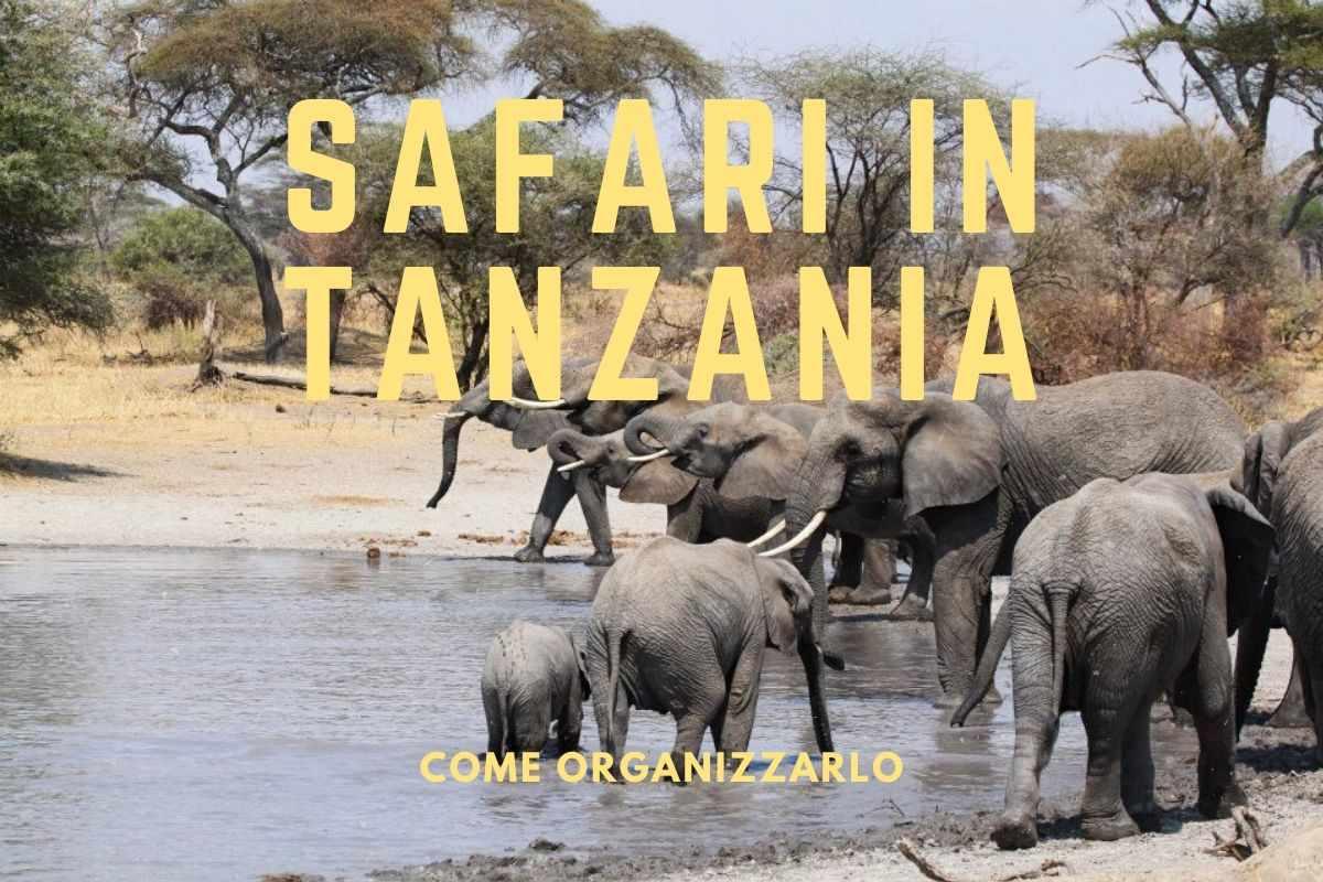 safari-in-tanzania