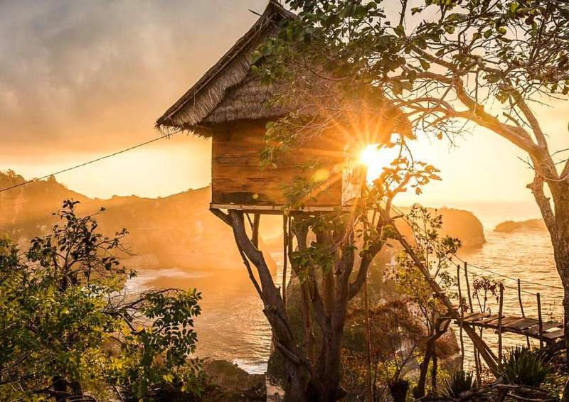 Rumah-Pohon-Tree-House