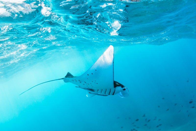 snorkelin-nusa-penida