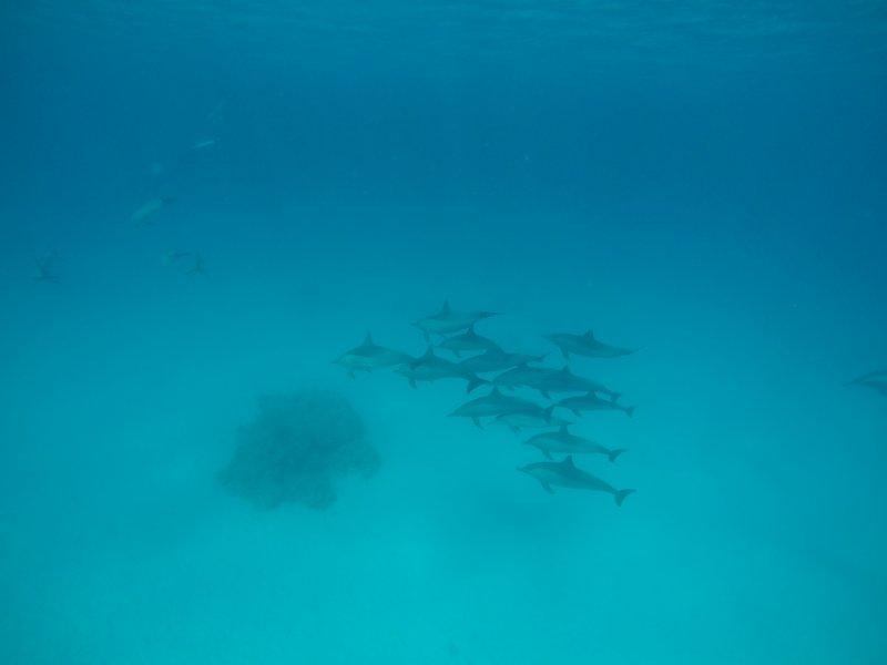 snorkeling-sataya-reef