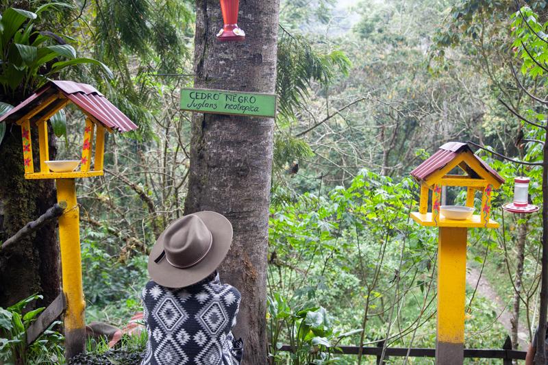 acaime-casa-colibrì