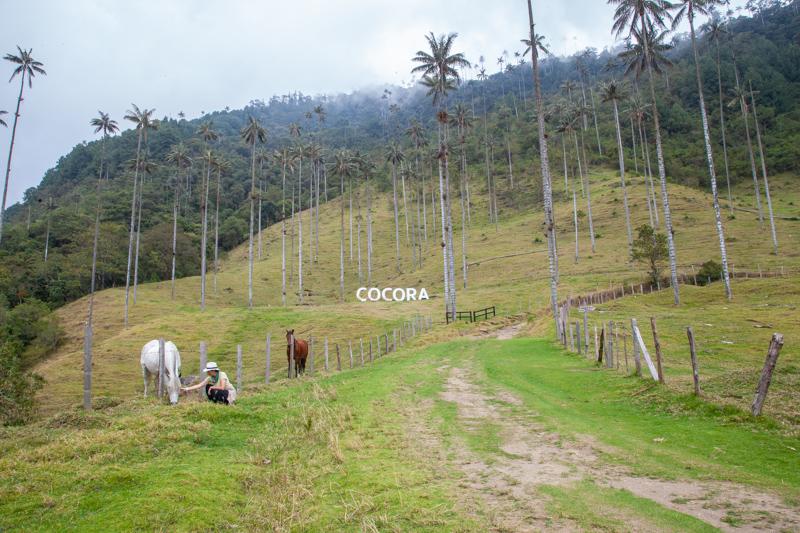 trekking-valle-cocora-informazioni