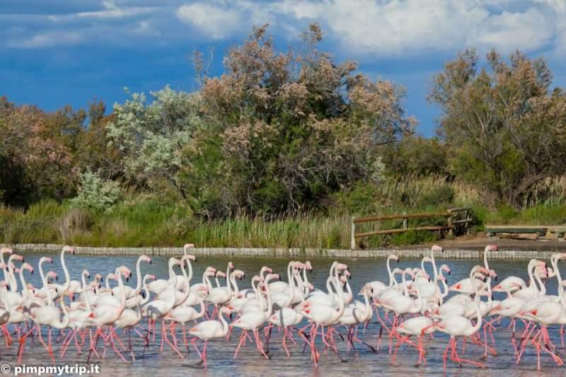 parco-ornitologico-pont-de-gau-camargue