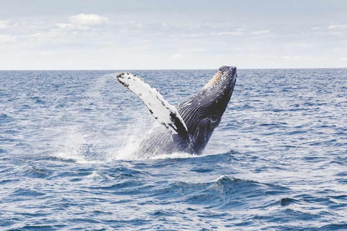 Osservazione balene Tenerife