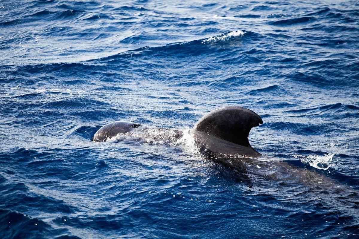 escursioni per Vedere balene a Tenerife